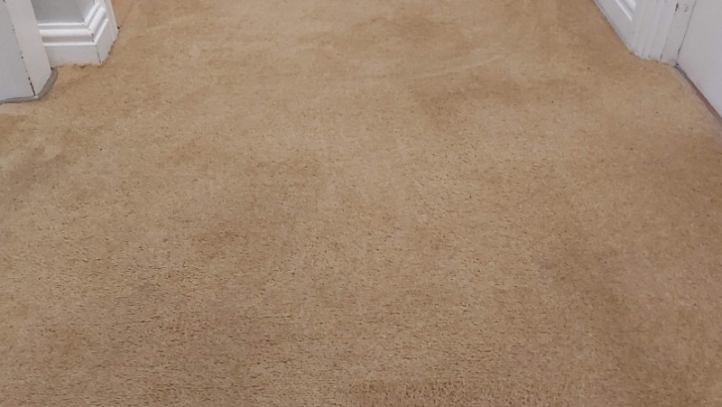 Carpet After